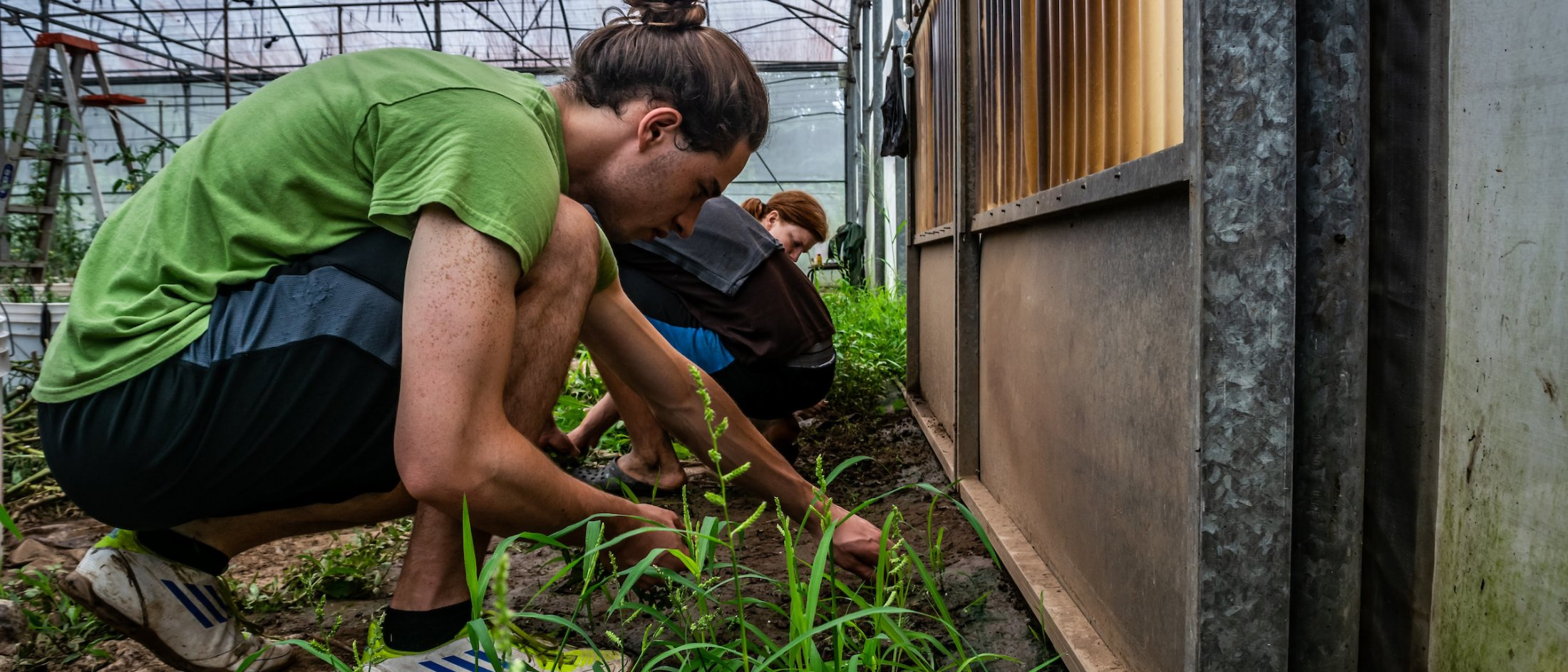 4 students working on a vegetable farm